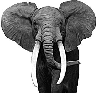 VIAJES RWANDA elefante