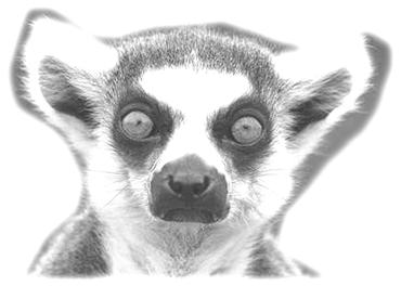 VIAJES Madagascar lemur