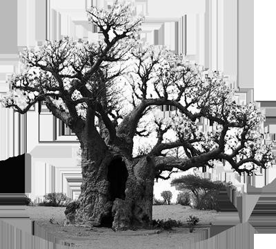 baobab senegal