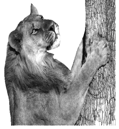 VIAJES BOTSWANA ZIMBABWE NAMIBIA leona