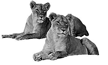 viaje sudafrica leonas