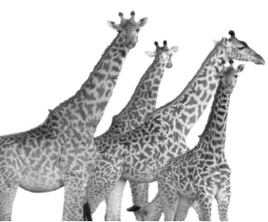 viaje girafas tanzania