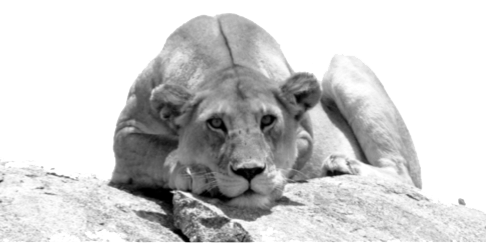 viajes tanzania leona