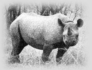 rino tanzania