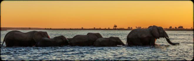elefante NAMIBIA VIAJES