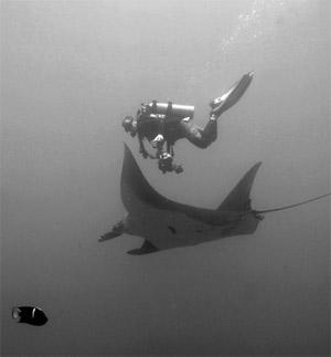 curso buceo tailandia