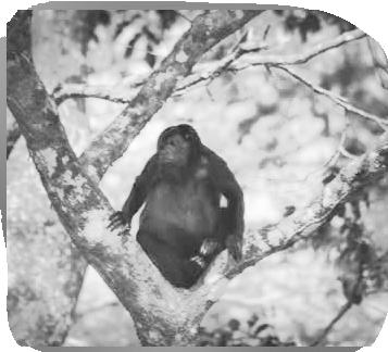 viaje costa rica mono