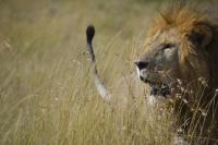 <strong>&quot;Sueña... descubre... explora... África enamora.&quot;<span> de Marta Garcia Sintes</span></strong><a href=https://www.pasaporte3.com/africa/viajes/tanzania-zanzibar/tanzania-zanzibar.php target=blank>Memorias de África Clásico &amp; Confort</a>