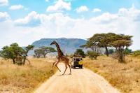 <strong>&quot;Foto Serengueti 2018&quot;<span> de Victor Tello Gracia</span></strong><a href=https://www.pasaporte3.com/africa/viajes/tanzania-confort/tanzania-confort.php target=blank>Tanzania Confort</a>