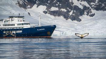 Antartida: Antártida