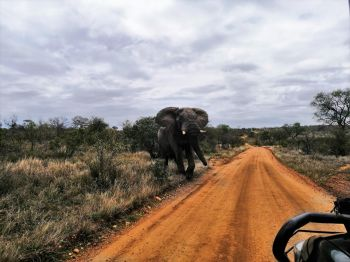 Safari en 4x4, PN Kruger.  Sudáfrica.: Sudáfrica, Swaziland