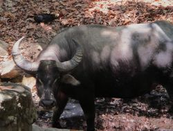 Bali, Java y Komodo: Indonesia