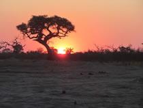 Moremi Sunrise. Botswana: Botswana, Cataratas Victoria