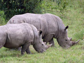 Parque Nacional Nakuru: Tanzania, Kenya