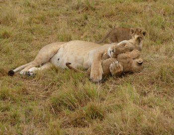 Avistando fauna salvaje: Tanzania, Kenya