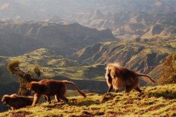 P.N. Montes Simien: Etiopía
