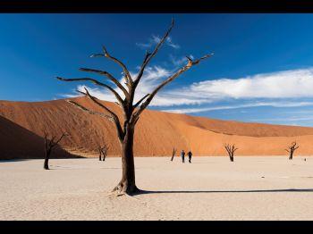 Deadvlei, desierto de Namib. Namibia.: Namibia