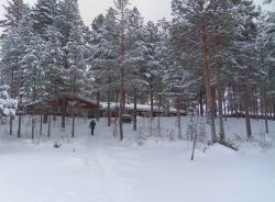 Finlandia, esquí nórdico: Finlandia