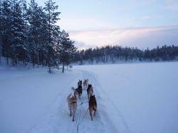 Finlandia, husky y raquetas: Finlandia