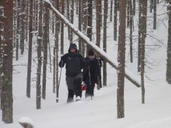 Finlandia, trineo de perros, motonieve y raquetas: Finlandia