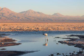 Salar de Atacama-Chile: Chile, Bolivia, Argentina, Brasil