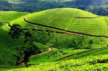 Munnar: India