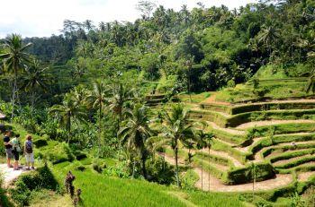 Ubud: Indonesia