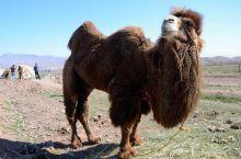 Campamento Nómada: Irán