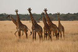 foto VIAJES Kenya 1