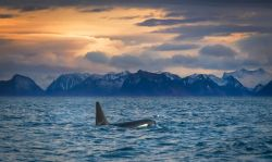 Lofoten, Auroras Boreales y Ballenas: Noruega