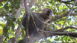 MFS Isalo : Madagascar