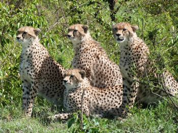 foto VIAJES Kenya 2