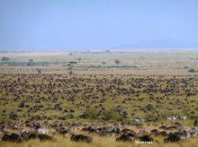 La gran migración en el PN Serengeti. Tanzania: Tanzania, Kenya, Zanzíbar