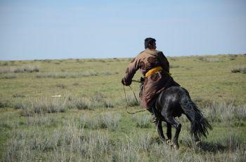 A recoger el ganado!: Mongolia
