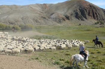Recogiendo el rebaño: Mongolia
