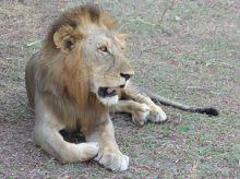 León Selous, Tanzania: Mozambique, Tanzania