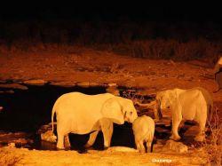Elefantes desde el Waterhole en el campamento. Etosha NP: Namibia