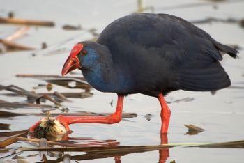 Observacion de aves: España