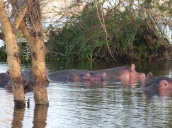 Origenes del Nilo: Uganda, Kenya