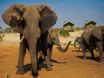 foto VIAJES Botswana, Cataratas Victoria 3