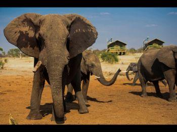 Elephant Sands, Botswana.: Botswana, Cataratas Victoria