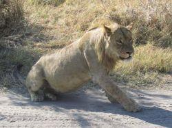 Primer safari en PN Chobe. Botswana.: Botswana, Cataratas Victoria