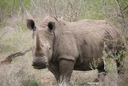 foto VIAJES Sudáfrica, Swaziland 2