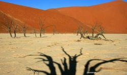 Vleis en el Desierto de Namib. Namibia.: Namibia, Botswana, Cataratas Victoria, Sudáfrica
