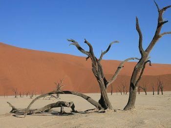 Deadvlei. Deiserto de Namib. Namibia.: Namibia, Botswana, Cataratas Victoria, Sudáfrica