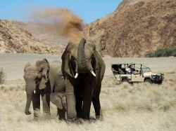 Elefantes de desierto. Wilderness Doro Nawas Camp. Namibia.: Sudáfrica, Namibia, Botswana, Cataratas Victoria