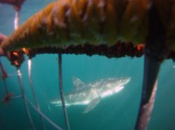 Bajada en jaula con Gran tiburón Blanco. Actividad incluida.: Namibia, Botswana, Cataratas Victoria