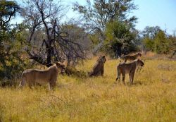 Safari en 4x4 en el PN Chobe. Botswana.: Sudáfrica, Namibia, Botswana, Cataratas Victoria