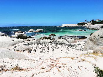 Pinguinos de Sudáfrica: Sudáfrica, Namibia, Botswana, Cataratas Victoria