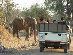 Safari en 4x4. PN Hwange. Zimbabwe: Botswana, Zimbabwe, Cataratas Victoria